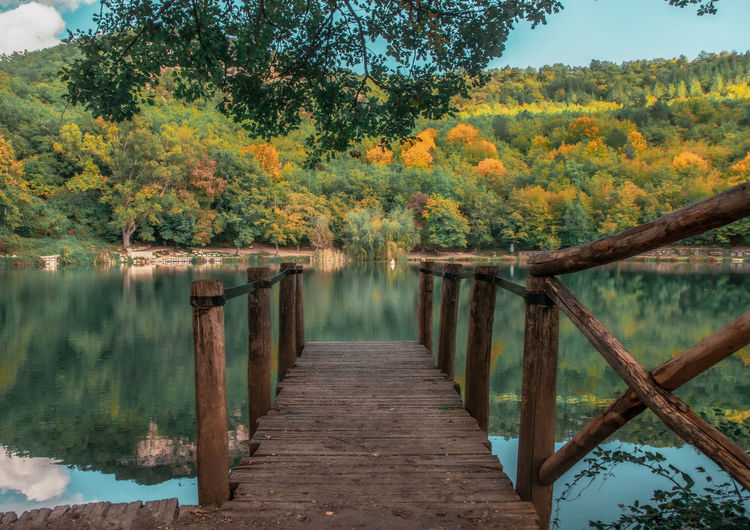 Wooden posts in lake amidst trees in forest