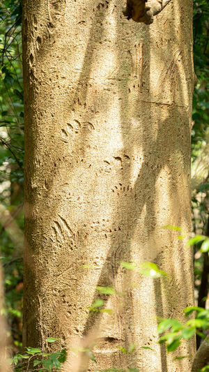 Close-up of tree trunk in forest