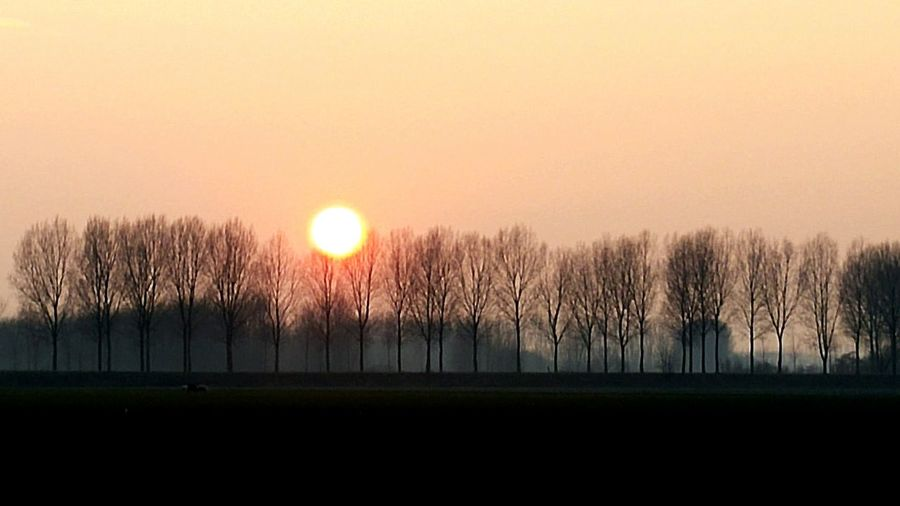 Hanging Out Sunset Sun Red Sun Red Sunset Red Sundown Evening Fields Trees Trees And Sky Silhouette Silhouettes Of Trees Agricultural Land Landscape Nature Nature Photography Nature On Your Doorstep Dutch Dutch Landscape Hulst Smartphone Photography