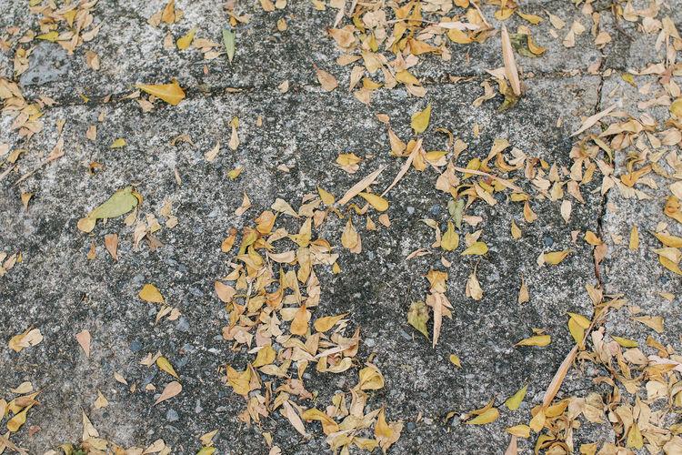 Full frame shot of autumn leaves on road
