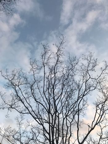 Sky Cloud - Sky Nature Beauty In Nature Low Angle View Tree Tranquility No People Outdoors Branch Day Scenics