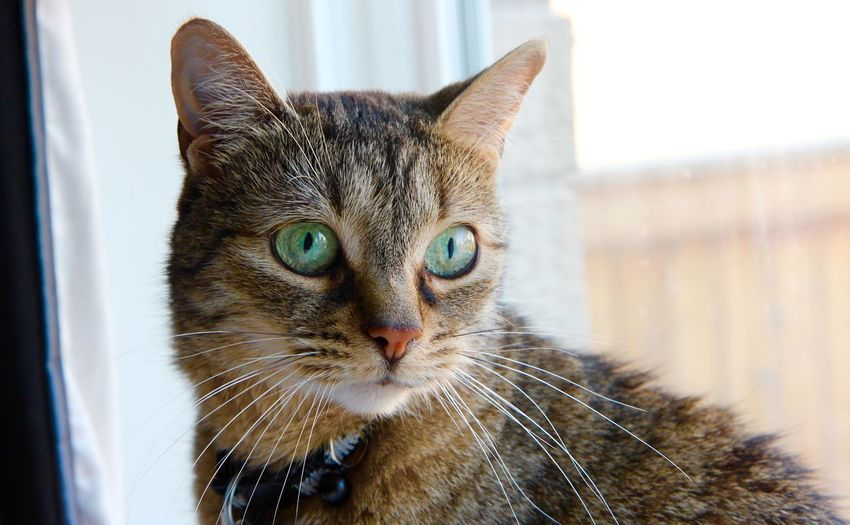 Alertness Animal Animal Body Part Animal Eye Animal Head  Animal Themes Black Color Cat Cats Close-up Day Domestic Animals Domestic Cat Feline Focus On Foreground Green Eyes Mammal Nature No People Pets Portrait Snout Staring Whisker