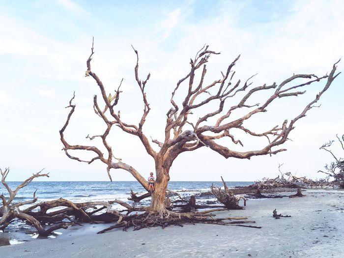 Bare trees on beach