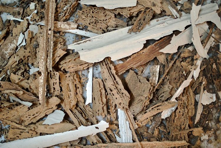Wood - Material No People Nature Damaged Day Close-up Tree Full Frame Backgrounds High Angle View Brown Tree Trunk Wood Large Group Of Objects Termite Termites