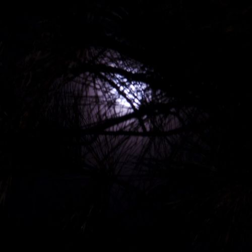 Fear Of The Dark Moonglow  Trees Night
