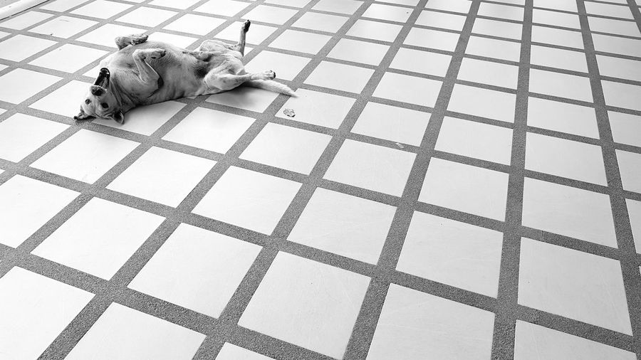 hospital dog Dog Street Photography Street Dog Canine Photography Canine Stray Dog Laying On The Floor Show Off Happy Time City Life Contempt Relaxing My Spot My Space Dog Life Leisure Pattern High Angle View Tiled Floor Close-up Tile Flooring