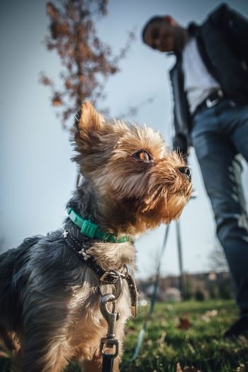 Low angle view of man with dog standing on land