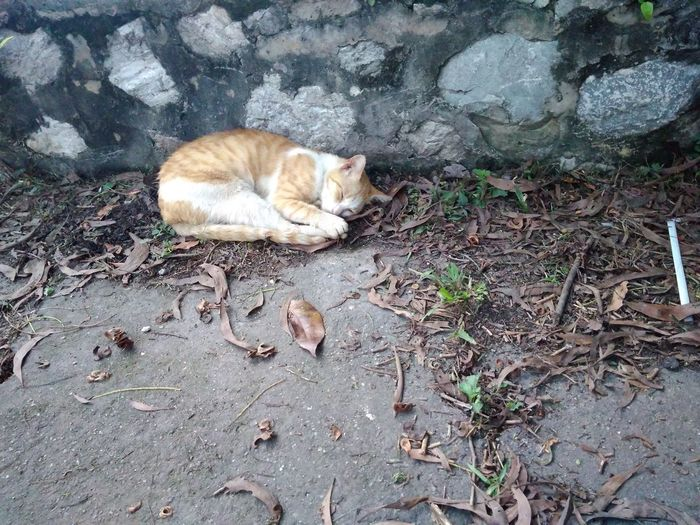 cat sleep Lying Down Cats 🐱 Daylight Outdoors Sleepy Cute Pets No People Day Domestic Cat Mammal Pets Animal Themes Domestic Animals High Angle View One Animal Relaxation Feline Relaxing