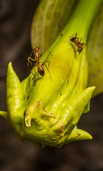 ant macro shot