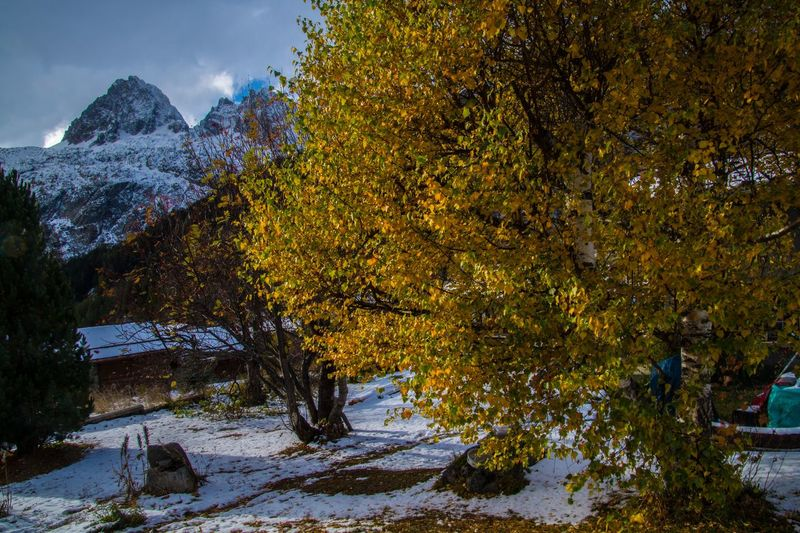 le tour,chamonix,haute savoie,france Tree Autumn Plant Beauty In Nature Change Tranquility Nature Scenics - Nature Tranquil Scene Snow No People Water Mountain Cold Temperature Day Winter Outdoors Sky