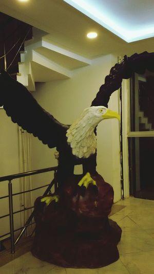 Tekirdağ Eagle Kartal Genesis Big Mammas