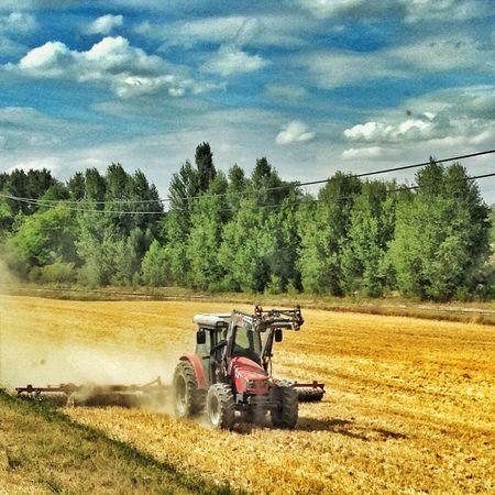 Moisson Tracteur Tractor