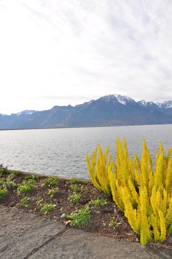 Lake Leman Lausanne Lac Léman