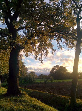 Nature Nexus5 Autumn