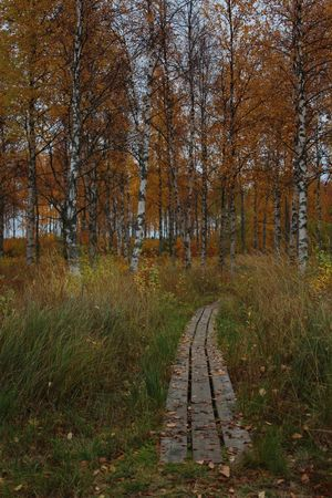 Autumn Autumn Colors Finland Lapland Autumn Bare Tree Beauty In Nature Branch Forest Grass Landscape Leaf Nature No People Outdoors Scenics Sky Tree Lost In The Landscape The Great Outdoors - 2018 EyeEm Awards