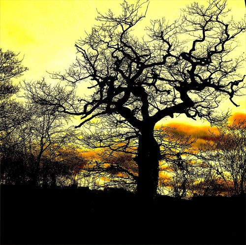 Sinister Dramatic Halloween Scary Creepy Silhouette Sunset Outdoors Nature Sky Beauty In Nature Low Angle View No People Tree