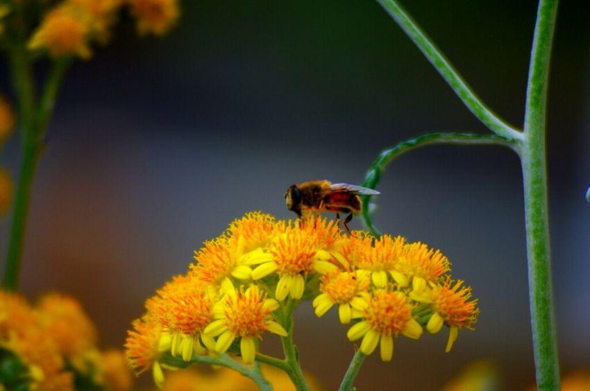 花 スナップ 黄色 蜂
