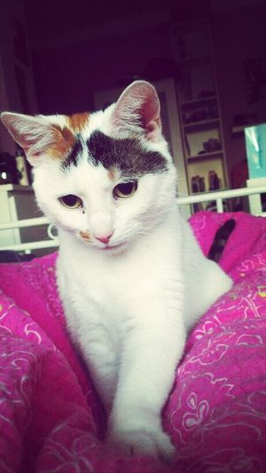 my little princess :* Cat Amyvangogh Mylittlebabycat