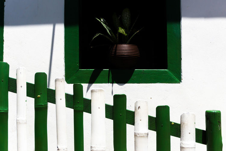 Close-up of potted plant against fence