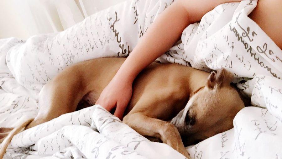 Att vakna upp med denna tös bredvid sig 😍🐶 Doggisen