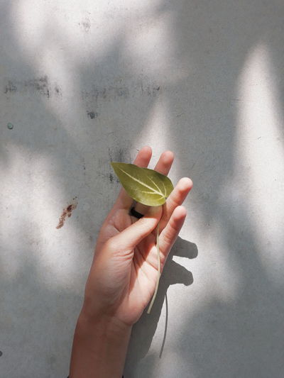 Close-up of hand holding fruit against wall