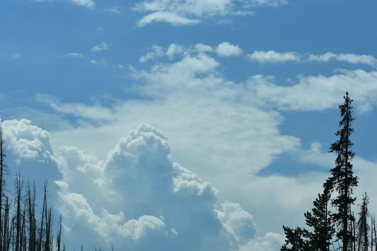 Trees Billowing Clouds Blue Sky No People Sky Storm Clouds Sun Chasing Storm Sun Through Clouds