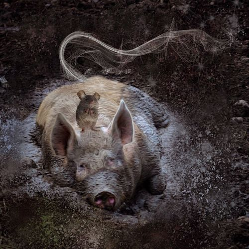 Pig-Tales ~ tales told by Pigs :) EyeEm Gallery Huffington Post Stories Nature EyeEm Nature Lover Nature_perfection Nature_collection Animals Pigs Nature Photography Nature Makes Me Smile