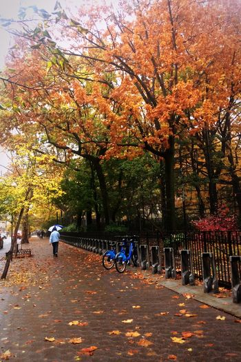 People riding bicycle in park during autumn