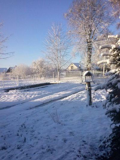 Snow Snow ❄ Tree , Snow , Winter , Drzewo, śnieg , Zima