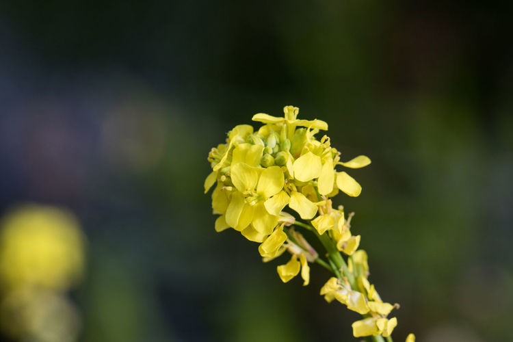 close up small yellow flowers Flower Flowering Plant Vulnerability  Fragility Beauty In Nature Plant Growth Freshness Close-up Yellow Flower Head Petal Focus On Foreground Inflorescence Nature Day No People Selective Focus Outdoors Botany Macro