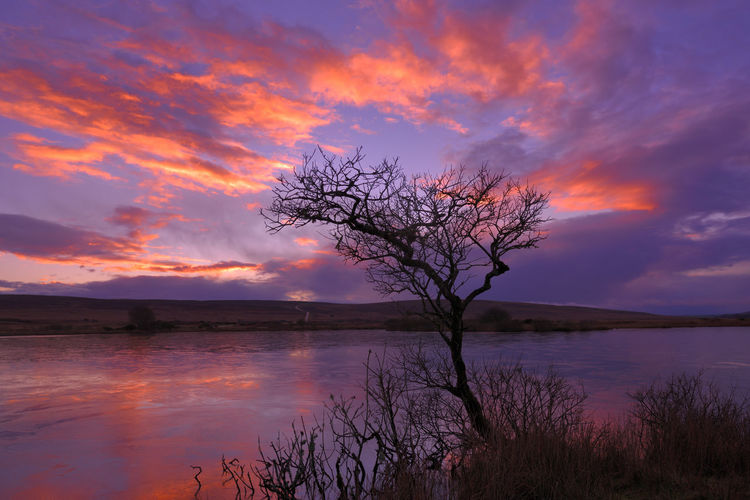 Silhouette tree by lake against sky during sunset