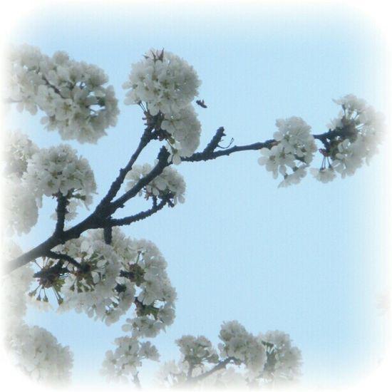 steiermark, Austria Bee Sky Trees Nature_collection Flowers