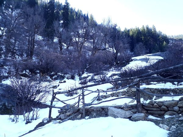 Rocks Snow No People Clear Sky Trees Bushes And Trees Pine Woodland Tree Area WoodLand Frost Weather Condition Dense Treetop Spruce Tree Wilderness