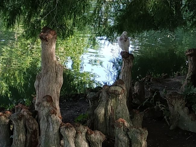 Tree Tree Trunk Forest Branch Water