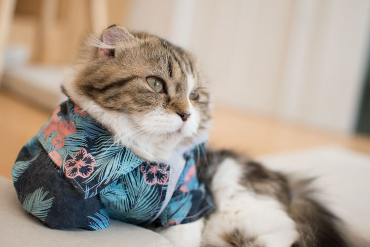 Pets Domestic Domestic Cat Domestic Animals Cat Animal Themes Mammal Animal Feline One Animal Indoors  Relaxation Kitten Young Animal Focus On Foreground Selective Focus Cute Home Interior No People Vertebrate Whisker Animal Head