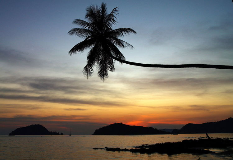 Reclining coconut palm tree over river at dusk