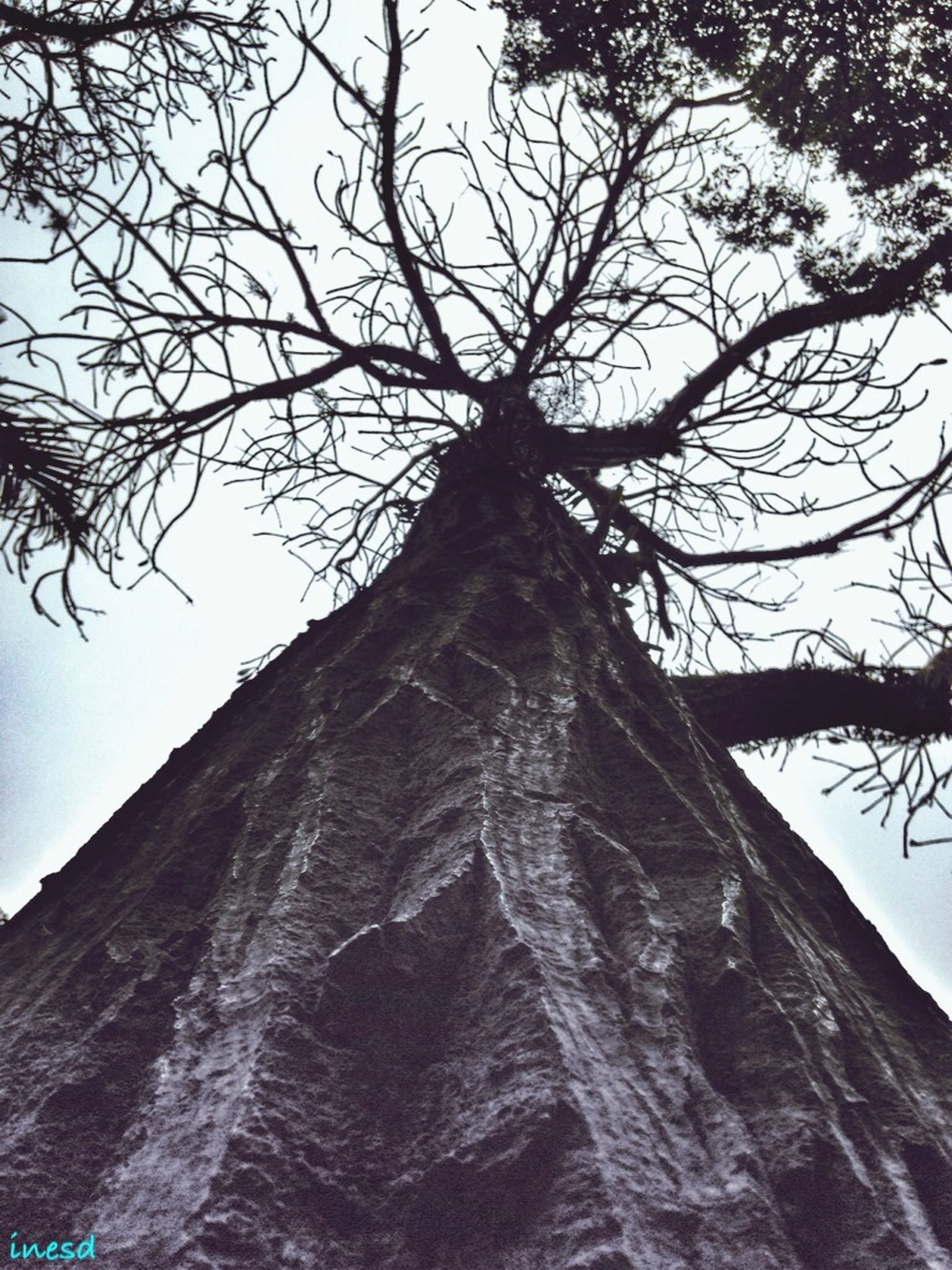 low angle view, tree, branch, bare tree, sky, tree trunk, architecture, built structure, clear sky, building exterior, nature, day, outdoors, no people, growth, tall - high, tranquility, old, sunlight, tall