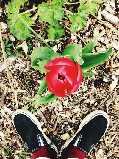 Flower Nature Vans Shoes First Eyeem Photo