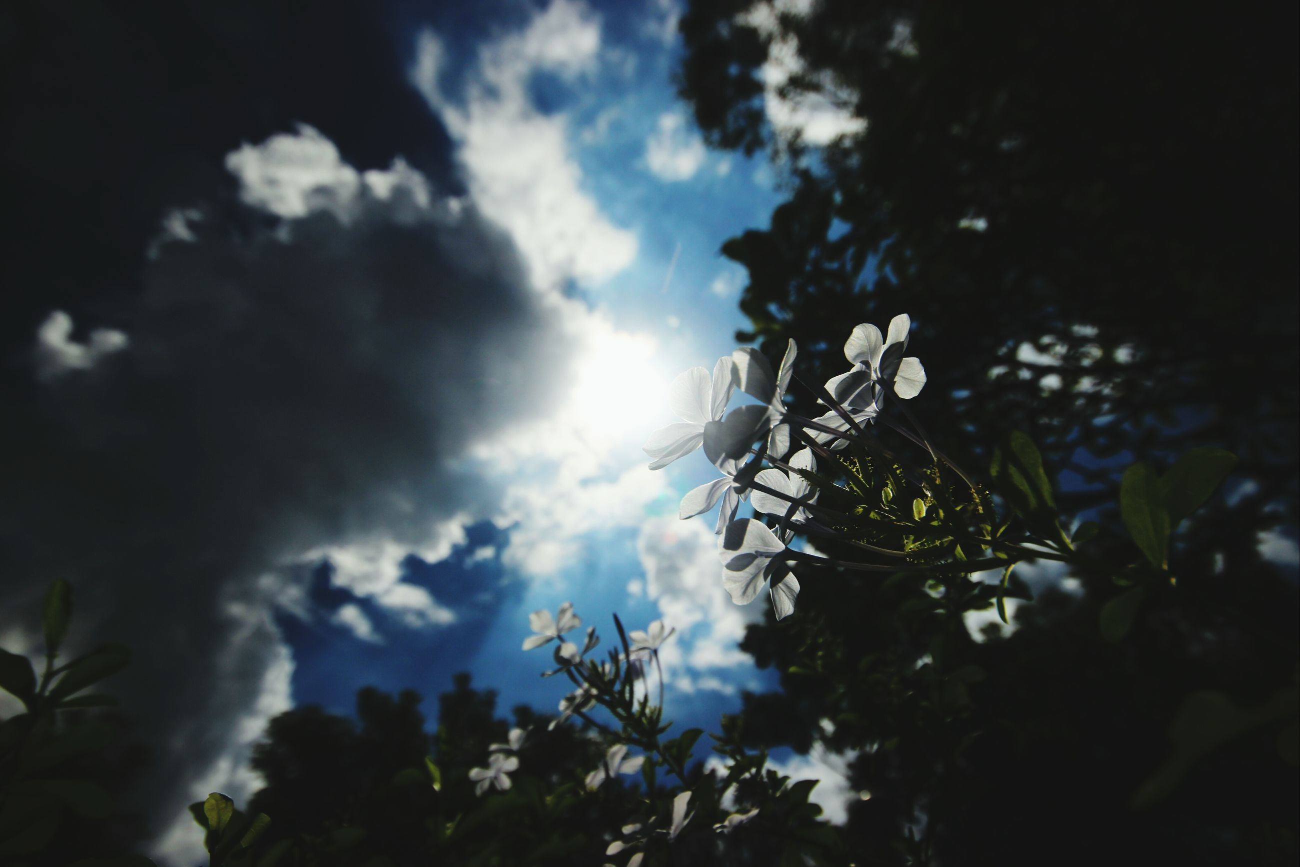 low angle view, sky, cloud - sky, tree, growth, nature, beauty in nature, cloud, cloudy, outdoors, no people, plant, day, blue, silhouette, sunlight, built structure, flower, tranquility, close-up
