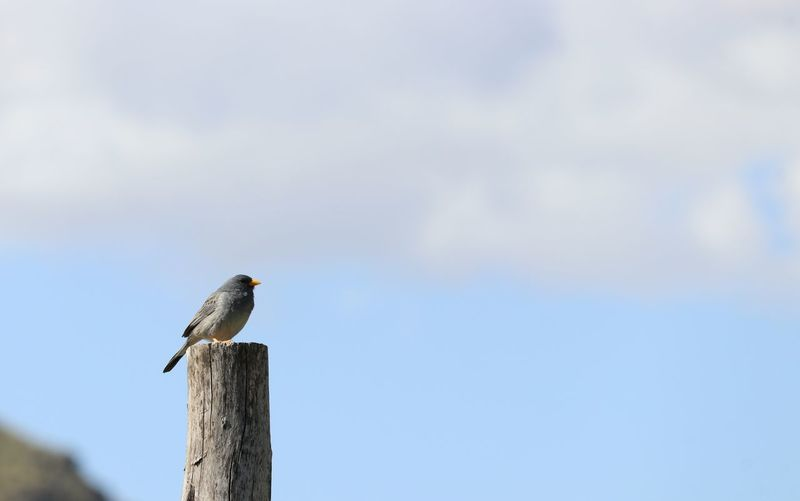bird on post Sky Minimalism Lonely Beak Orange Beak Animals In The Wild Clouds And Sky Nature Bird Perching Vulture Sky Close-up Wooden Post