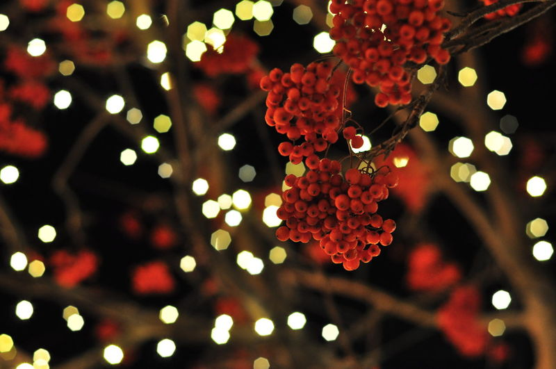 LOW ANGLE VIEW OF ILLUMINATED RED FOWERS