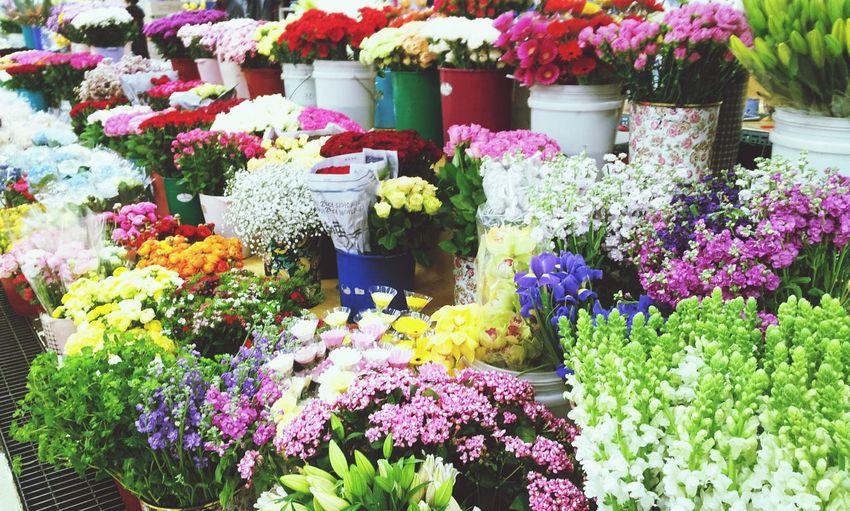 Flower Market 꽃시장 Flowers