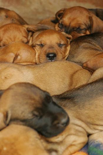 Close-Up Of Dogs Sleeping