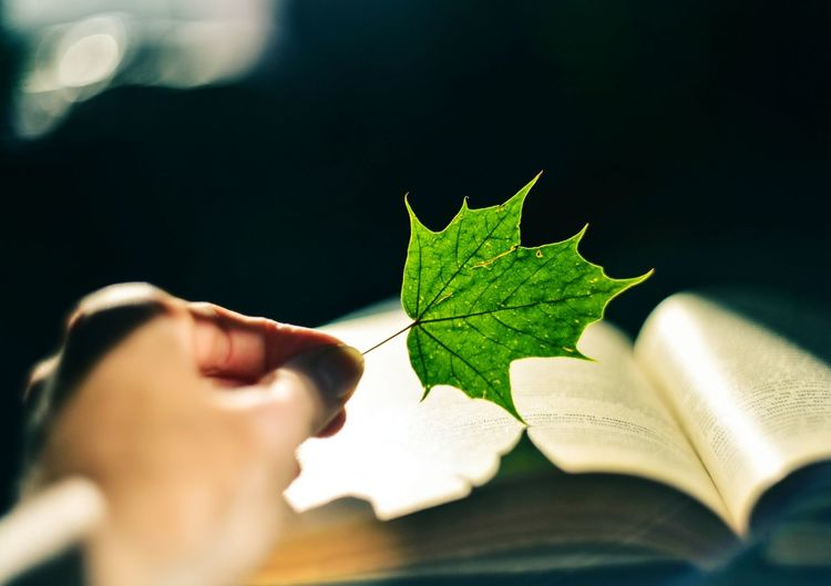 Book Light Nature Hand Life Lifestyles Phptography Bokeh Nature_collection Nature Photography Green Color Beauty In Nature Reader Dark Focus Helios Helios44m Keep  Room Live Akcent Leaf 🍂 Leafs Photography Leaves🌿 Steel Human Lighthouse Light And Shadow Light From The Window