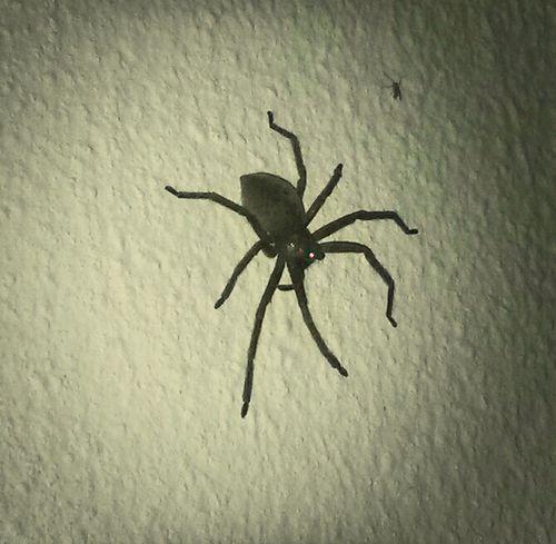 Spider Aranha Lisboa