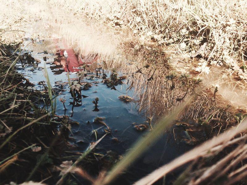 Puddle reflection Puddle Reflection Grass Walk Nature Wolverhampton Walking Around HD