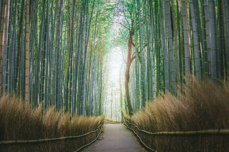 trees for days. Arashiyama Attention Diminishing Perspective EyeEm Best Edits EyeEm Best Shots EyeEm Nature Lover Footpath Japan Nature The Way Forward Tranquility Tree Vanishing Point
