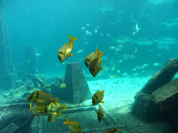 Backgrounds Crystal Blue Water Fish Fish Tank Golden Fish Nature Ocean Fish Underwater Water