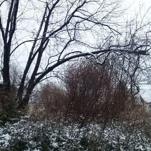 Schnee Snow Februar Ernsthaft jetztnochachegalichmagschnee