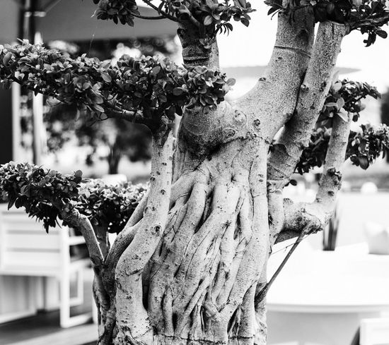 Close-up Day Focus On Foreground Nature No People Outdoors Tree Terrace Firstpicture Streetphotography Beautiful First Eyeem Photo Grain 50mm EyeEmNewHere Textured  in Vila Do Conde